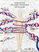 Allegoric representation of the variability of the transcriptome through changes in alternative splicing in difference cancer types. Illustration by Babita Singh